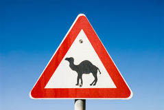 Beware of camels near de road Stock Photo